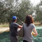 オリーブ農園訪問